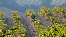 camping-la-tou-de-france-viticulture-vin