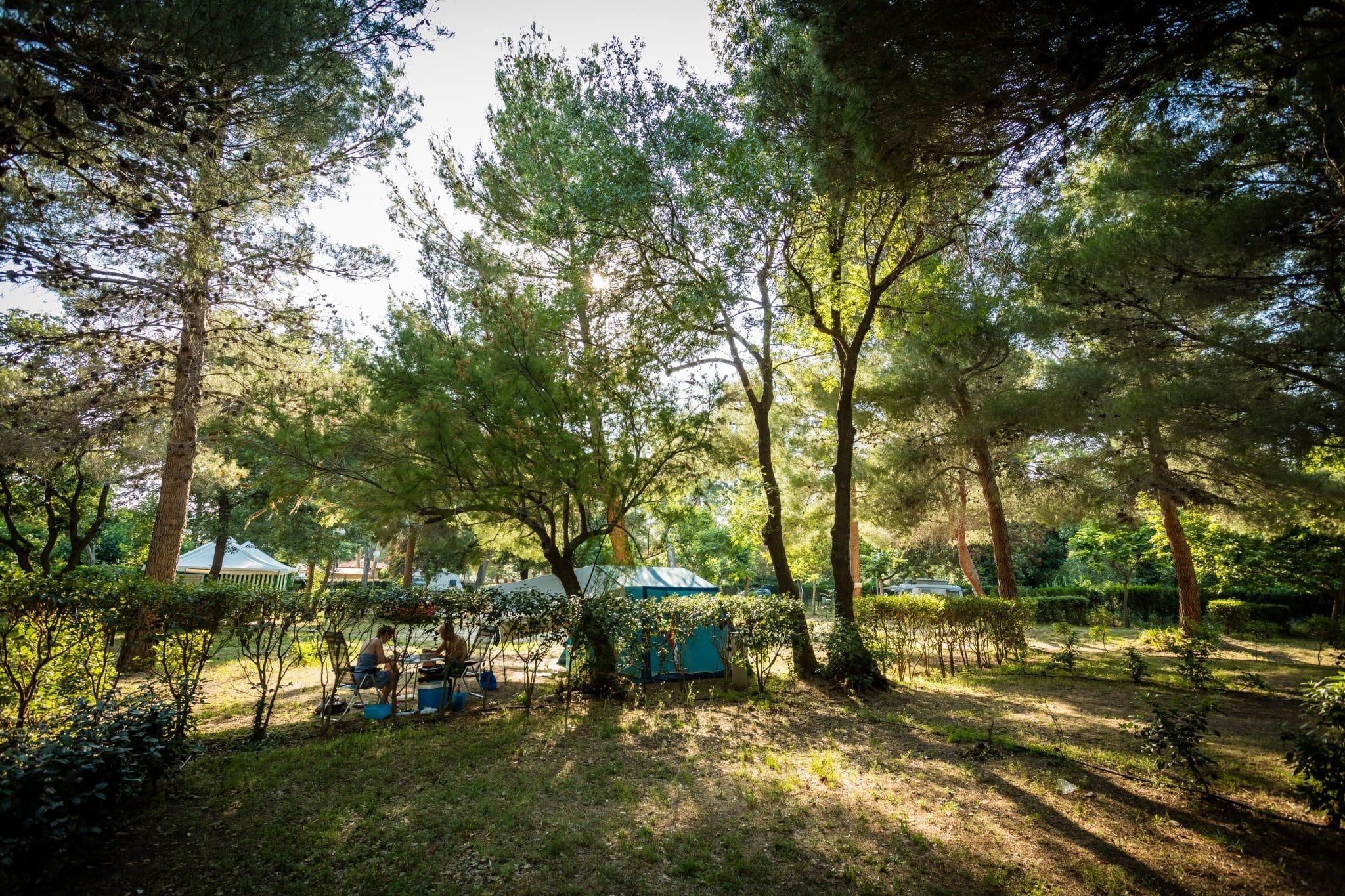 camping-la-tour-de-france-nature-environnement-camping-vert