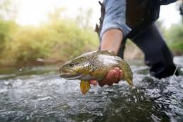 pêche-à-la-truite-camping-la-tour-de-france